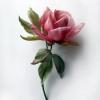 роза-бутоньерка